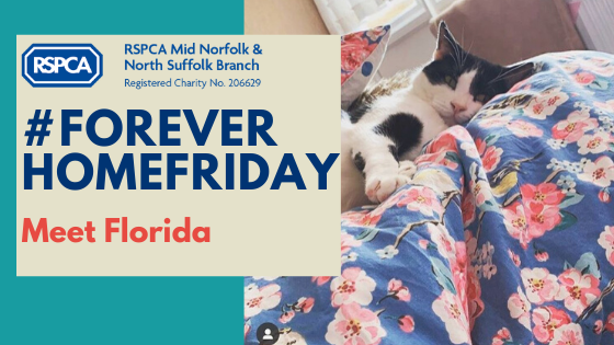 #ForeverHomeFriday: Meet Florida