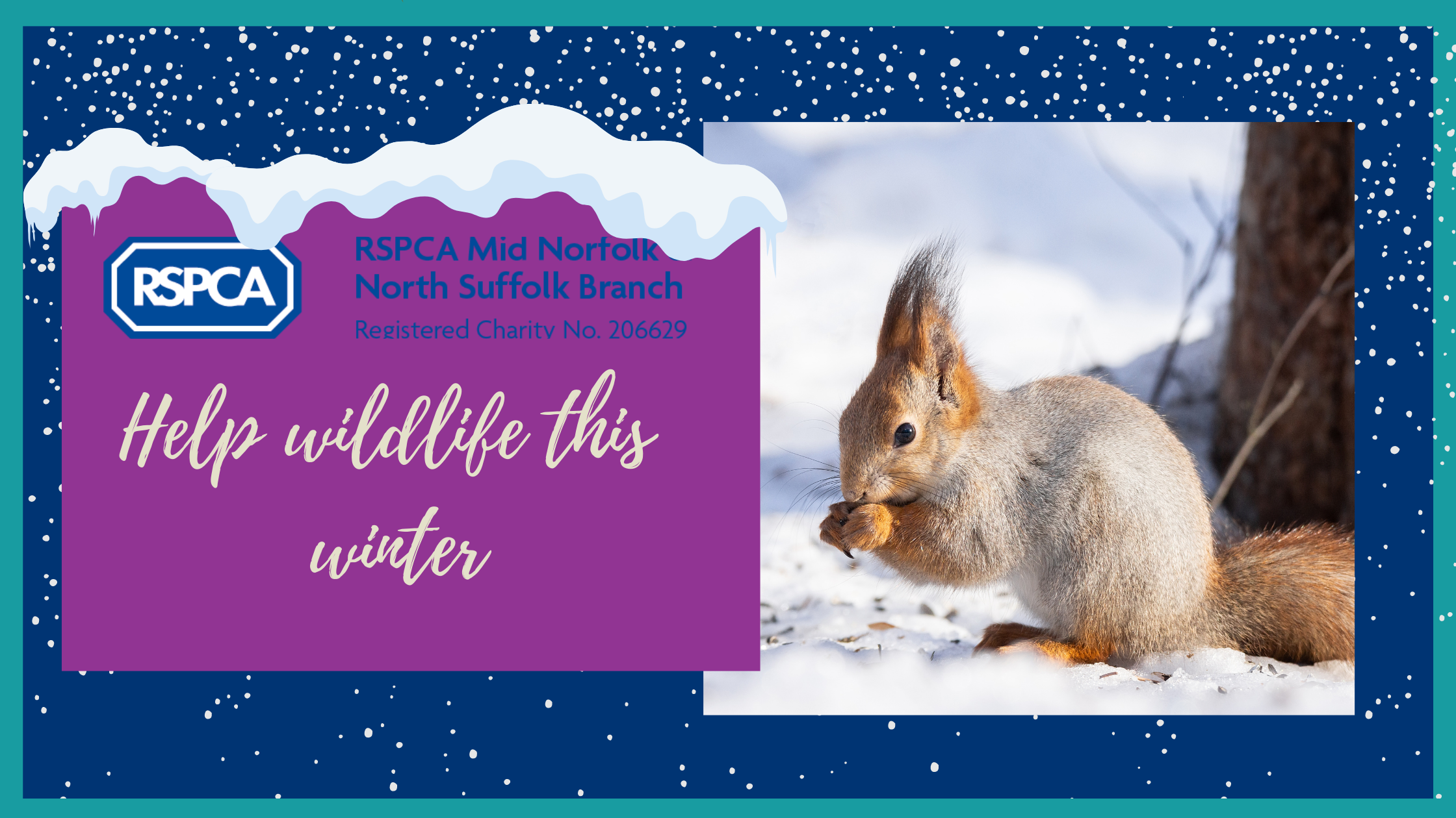 Seasonal advice- Helping our wildlife this winter