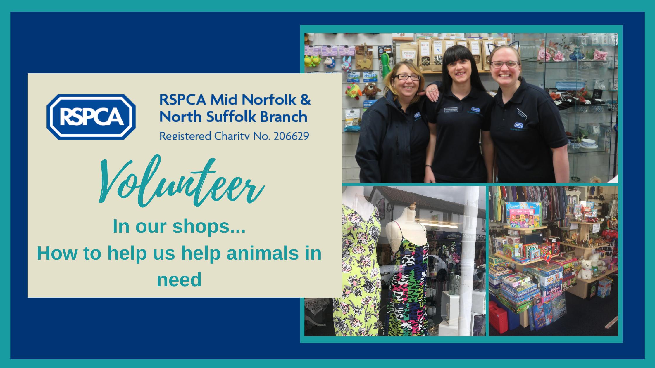 Volunteering- how can I help animals in need?