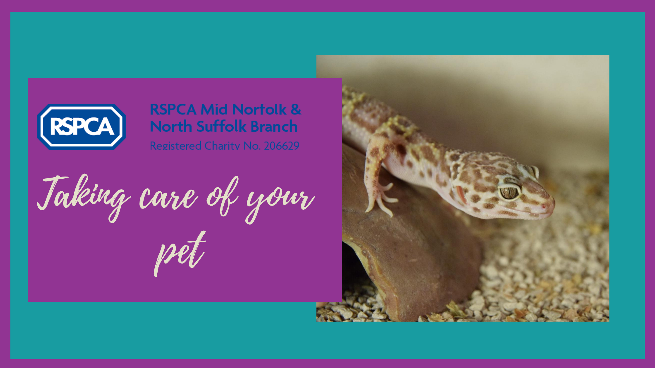 Keeping pets cool this summer- Fish, amphibians and reptiles