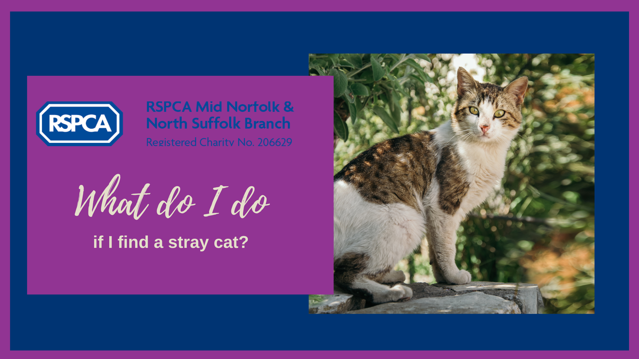 What do I do if I find a stray cat?