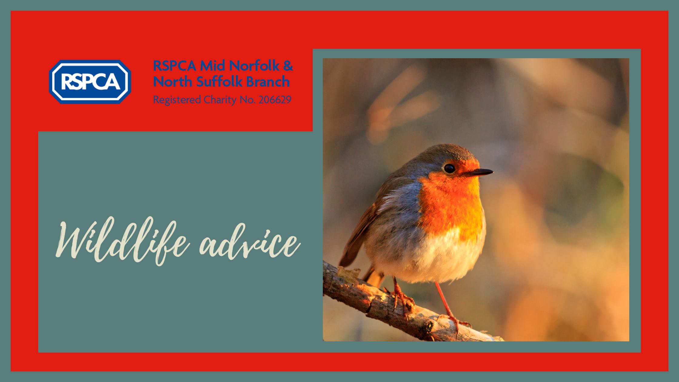 Help Birds this Autumn