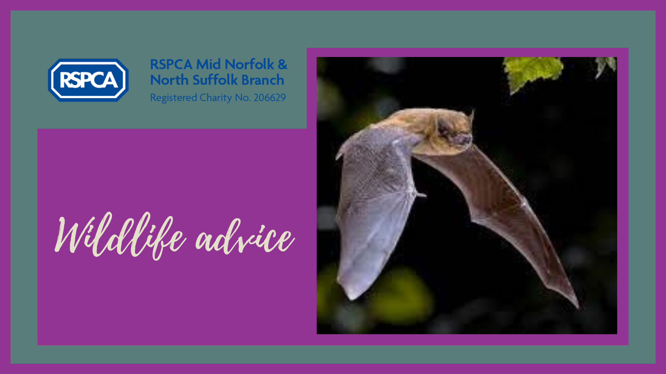 We are going batty for bats this October!